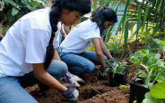 A & C academy adds to growing garden at Ka Hale a Ke Ola